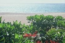 ビーチに生える植物