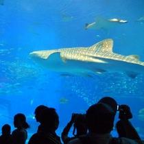 【美ら海水族館】 沖縄といえば美ら海水族館!巨大水槽にジンベイザメetc・・