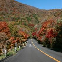 久住ロードパークの紅葉
