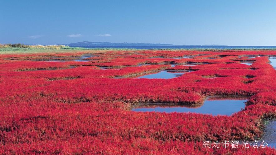 *[能取湖]当館より車で約17分。例年見頃は9月中旬~下旬。サンゴ草は秋の訪れを告げる風物詩♪