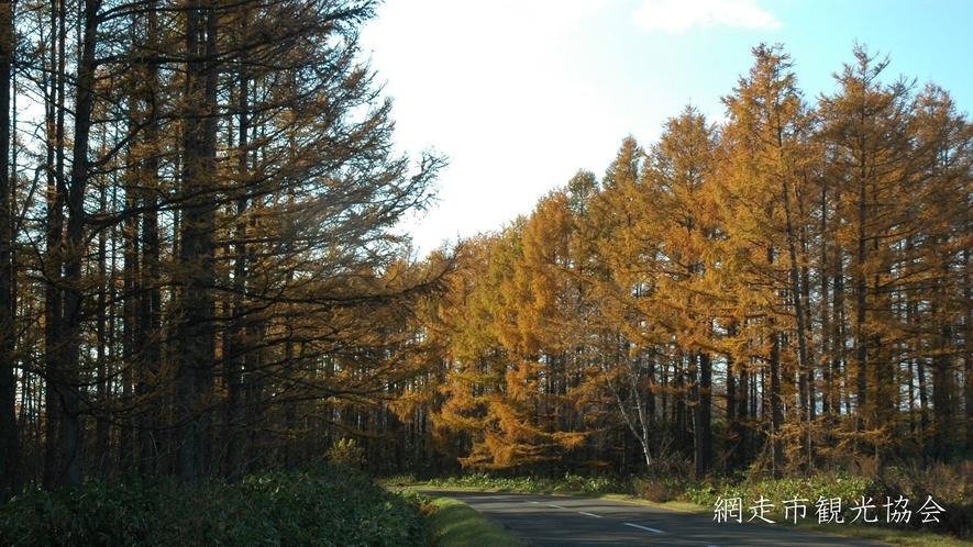 *[風景/秋]晩秋のカラマツ林