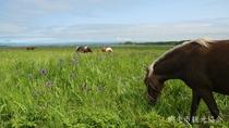 *[濤沸湖]当館より車で約30分。夏はヒオウギアヤメや草を食むポニーの放牧風景を見ることができます