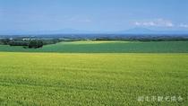 *[風景/夏]初夏のビール麦。網走の「二条大麦」。網走へ来たなら是非地ビールをご賞味下さい