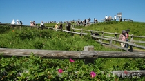 *[小清水原生花園]当館より車で約30分。初夏~夏にかけて天然のお花畑を見ることができます