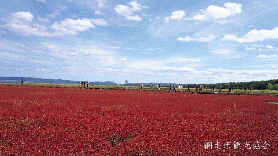 *[能取湖]当館より車で約17分。「真紅のカーペット」と呼ばれるサンゴ草の例年見頃は9月中旬~下旬