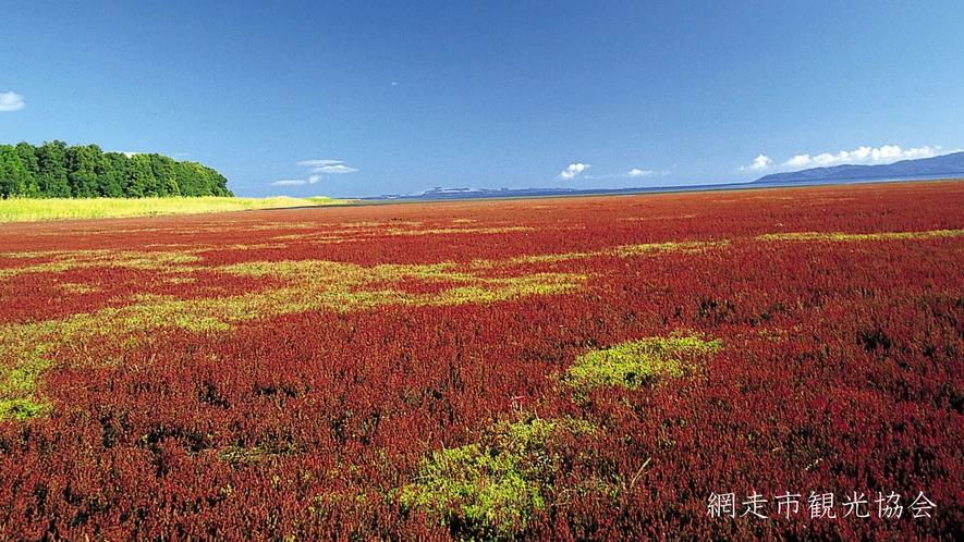 *[能取湖]当館より車で約17分。広大に広がる湿地帯が真っ赤に染まる秋。例年見頃は9月中旬~下旬