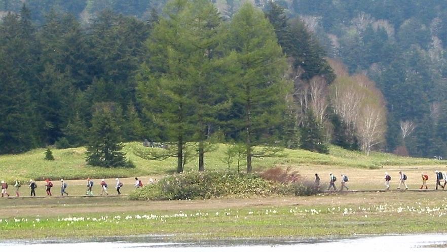 水芭蕉咲き始めた春の尾瀬沼を歩く人々