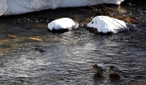 尾瀬野宴会場・越後より清流檜枝岐川の雪景色と、春の訪れも近いせせらぎを望む(2016年3月)