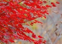 光り輝く自然美・尾瀬国立公園の紅葉(9月中旬~10月中旬)