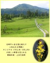 静かで、美しく可憐な花々にも出会える裏燧林道の四季・夏の上田代湿原