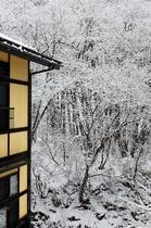 清流桧枝岐川渓谷の美しい初冬の雪景色に包まれた、せせらぎの宿尾瀬野(12月中旬)