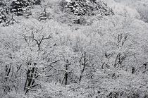 尾瀬野宴会場・越後より清流桧枝岐川渓谷の霧氷の雪景色を望む