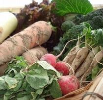 鴨川産の無農薬野菜