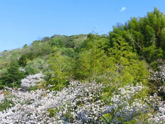 当荘から眺める、源氏山の春