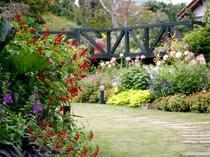 【ガーデン】春は華やかに、秋は落ち着いて。四季折々、違った趣を見せるイングリッシュガーデン。