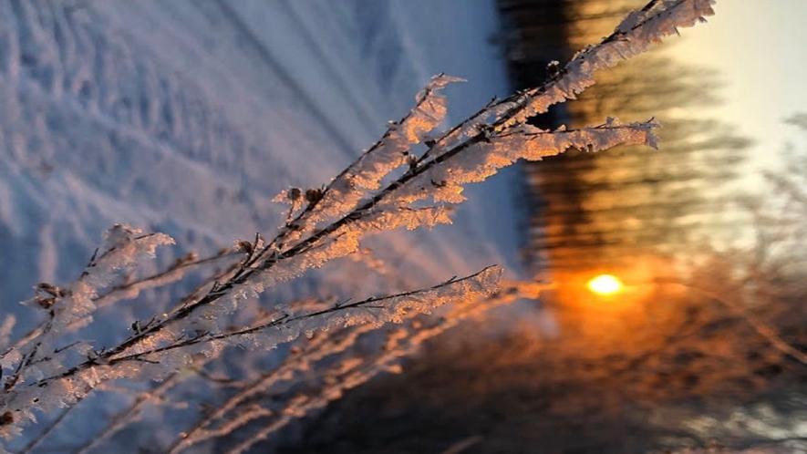 厳冬の氷の花