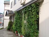 当館の緑のカーテン