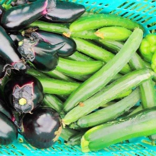 家庭菜園で収穫できた夏野菜のイメージです