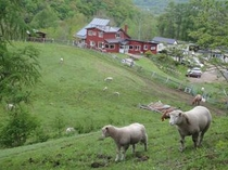 宿全景と子羊