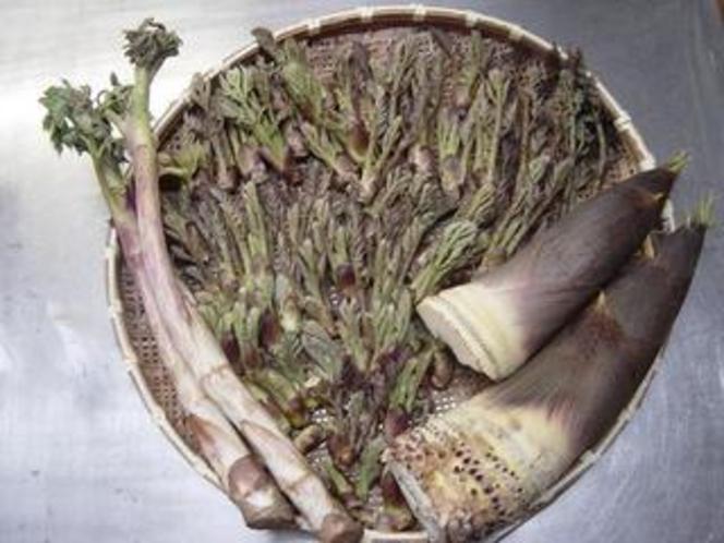 山菜(タラの芽・タケノコ・ワラビ・ウド)
