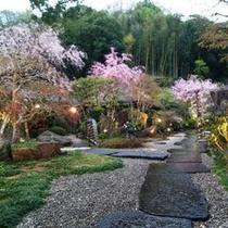 桜花を眺める庭園