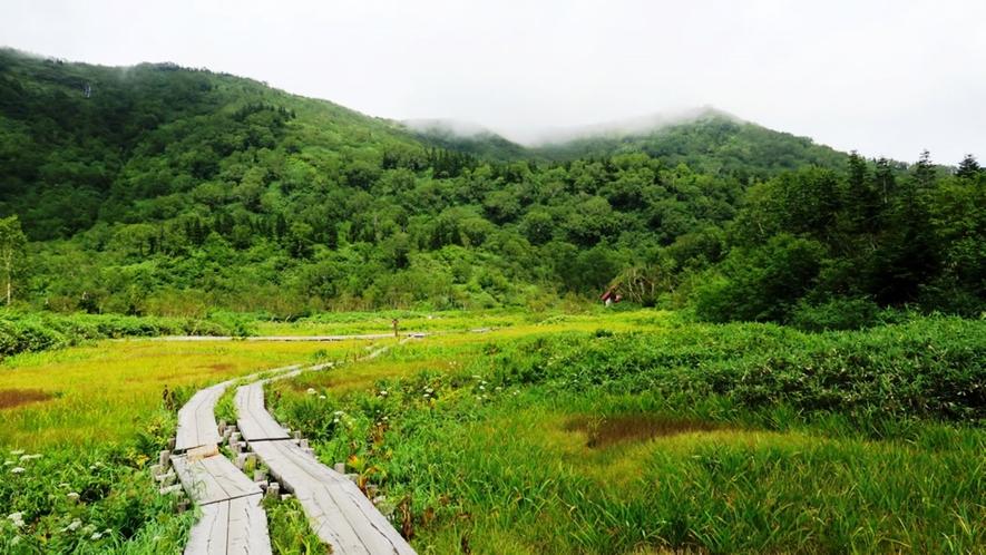 【栂池自然園】日本でも有数の高層湿原があります
