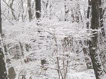 uraniwa_winter