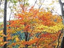 裏庭遊歩道の紅葉