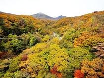 つつじ吊り橋周辺の紅葉