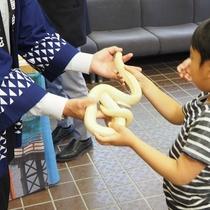 """【大蛇まつり】当日、観光会館では""""白蛇""""と触れ合えるイベントが開催されていました"""