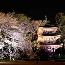 ホテル椿山荘東京の三重塔と夜桜