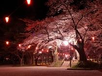 千秋公園の桜
