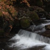 ●藤木川(紅葉)