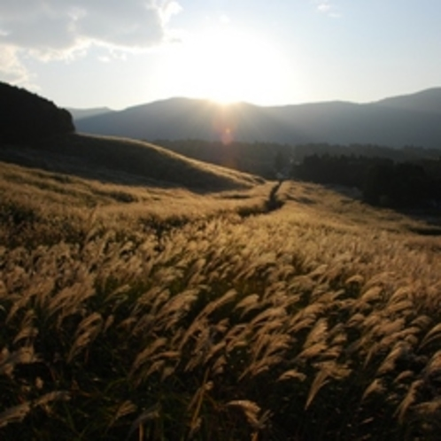 ●箱根の「仙石原 すすき草原」