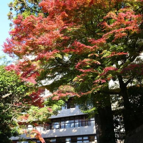【外観】秋 見事な紅葉が皆さまをお出迎え