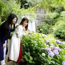 【万葉公園】一段と輝く夏の奥湯河原。初夏には紫陽花が皆様を迎え、6月には蛍が舞います。