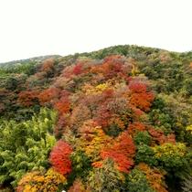 【展望露天風呂 大空】秋・ダイナミックな紅葉が目の前に!
