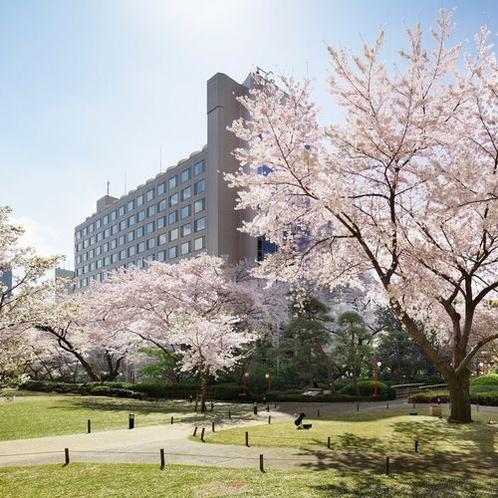 さくら色に染まる約20,000平米におよぶ日本庭園