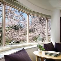 ■プレミアコーナーツインからの桜の景色(※桜の開花の時期・客室により見え方が異なります。)