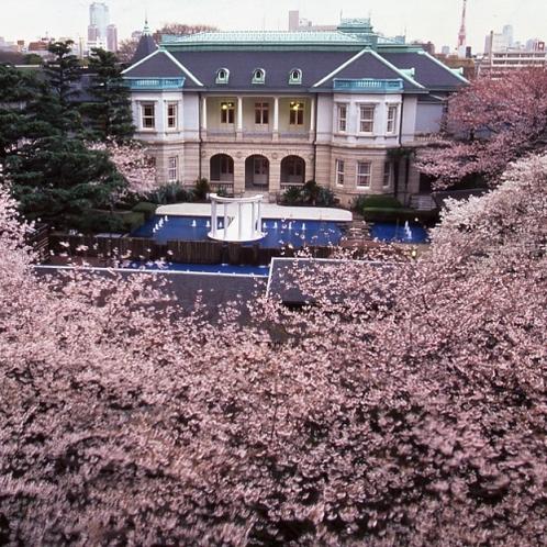 ■桜の時期の高輪