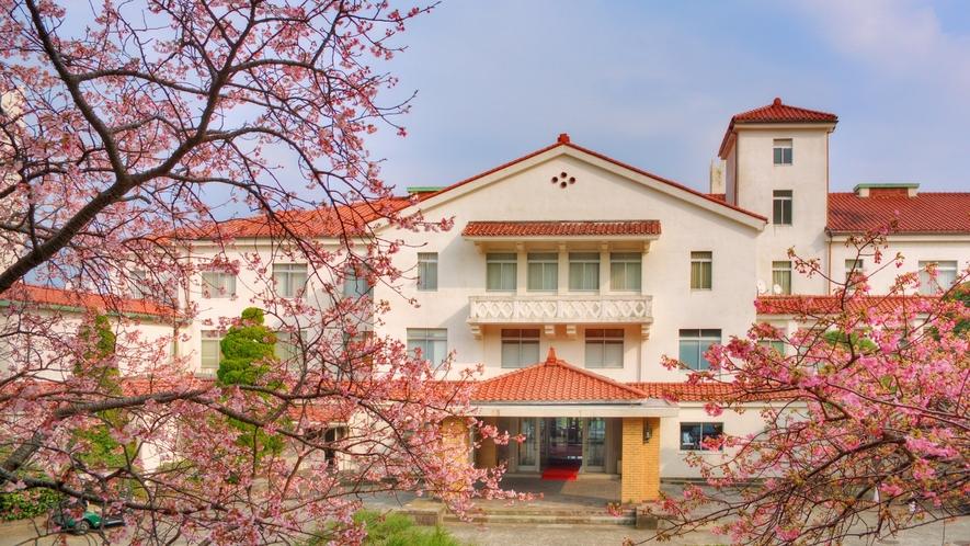 玄関の寒桜と河津桜