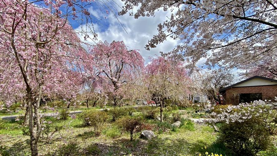 四季を彩る当館自慢のお庭♪