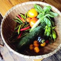 ≪夏野菜≫野菜は全て湯布院町内でとれたものを使っております♪