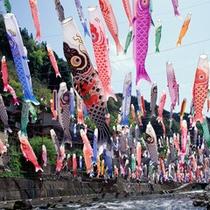 *鯉のぼり祭り