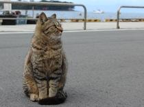 戸田港看板猫 会えたらいいこと起こるかも!