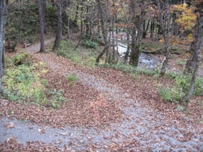 落ち葉のお散歩コース
