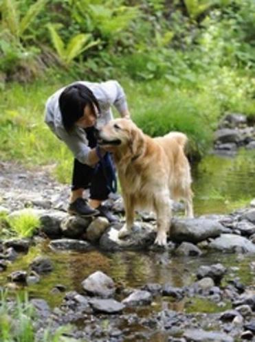 わんちゃんと川遊び