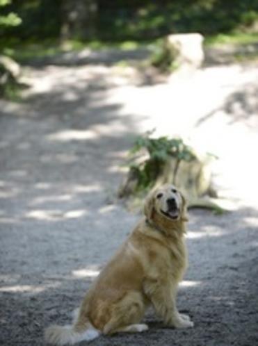 ドッグランと看板犬ジロー