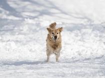冬のドッグランを駆ける