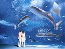 ちゅら海水族館まで1時間